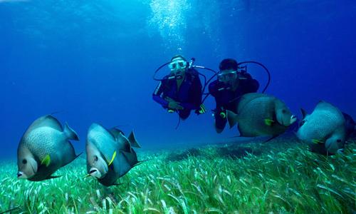 Buceo. Fotografía submarina