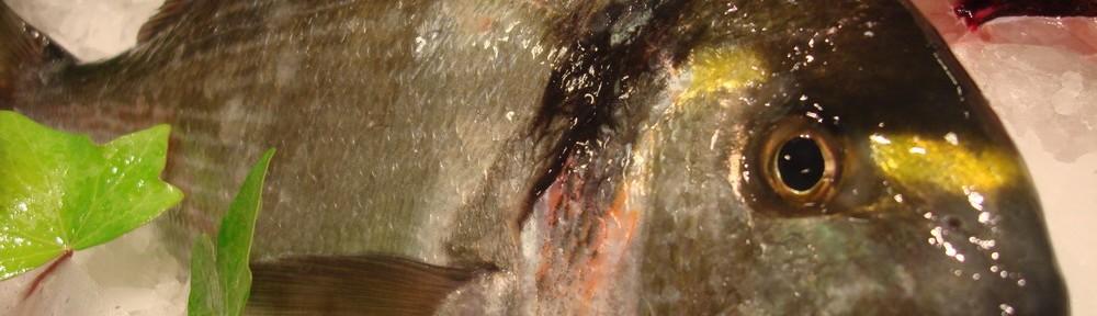 pesca-1000x288.jpg