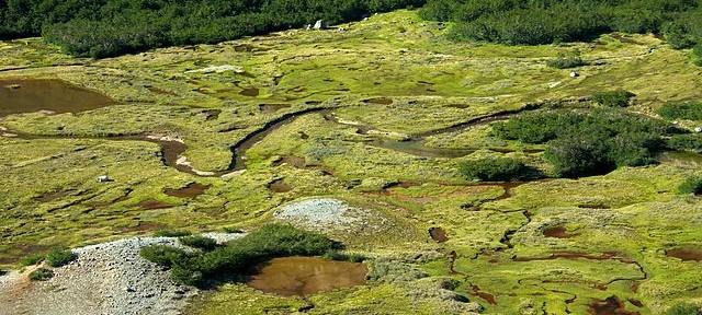 Argentina_-_Bariloche_trekking_127_-_twisting_alpine_wetlands_6798023559-640x288.jpg