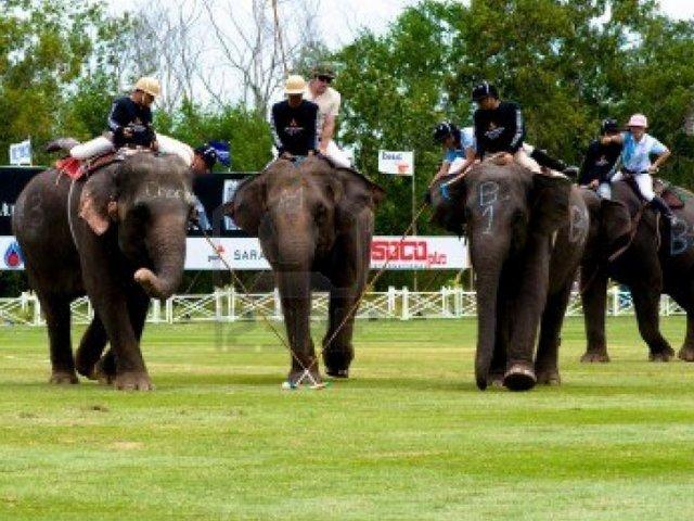 """Un-nuevo-deporte-""""coge-peso""""-en-Tailandia.-Polo-sobre-elefantes-2.jpg"""