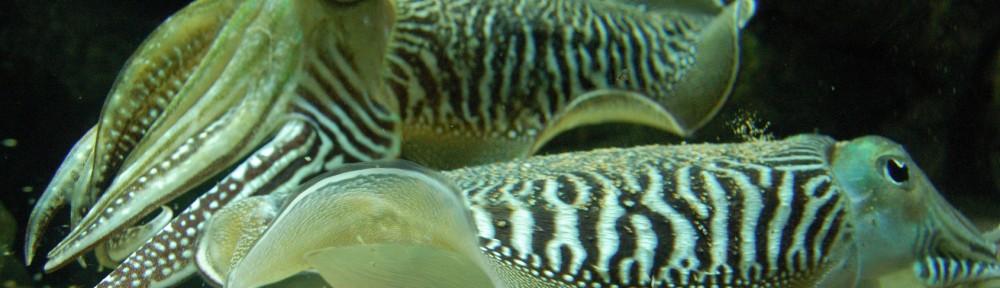 pesca-submarina-1000x288.jpg