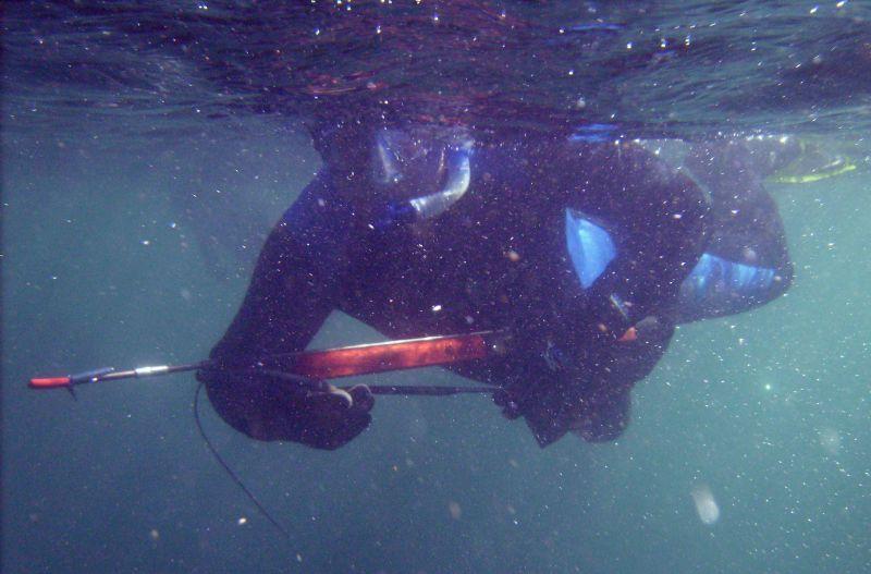 pescabub1.jpg