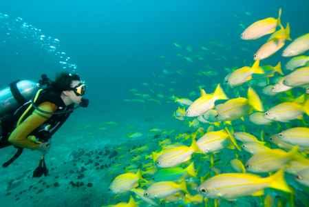 Bucear-en-Tailandia
